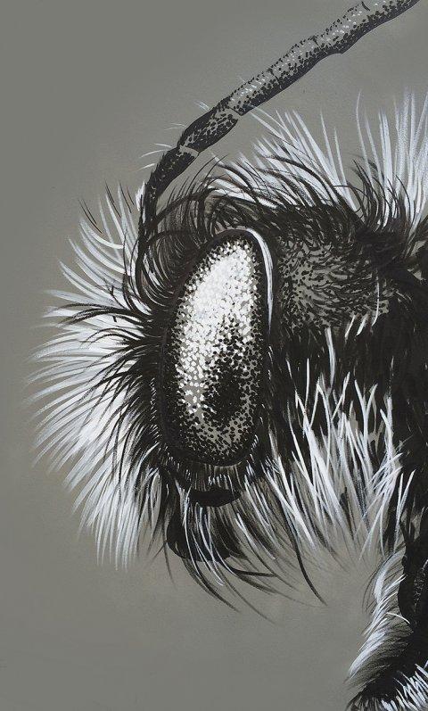 Bee – Macro