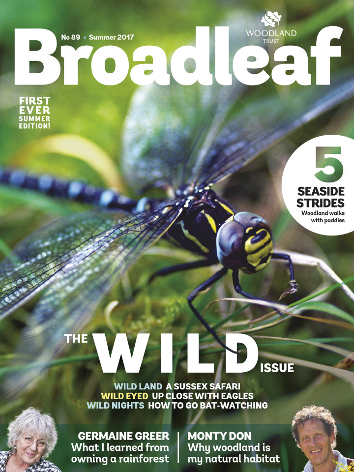 Broadleaf cover