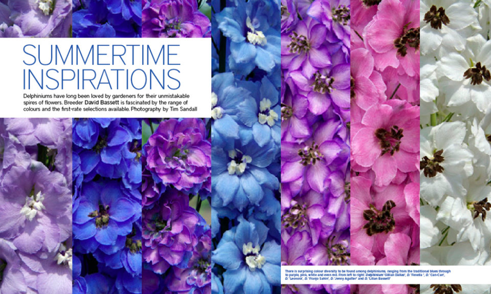 The Garden – Delphiniums Layout