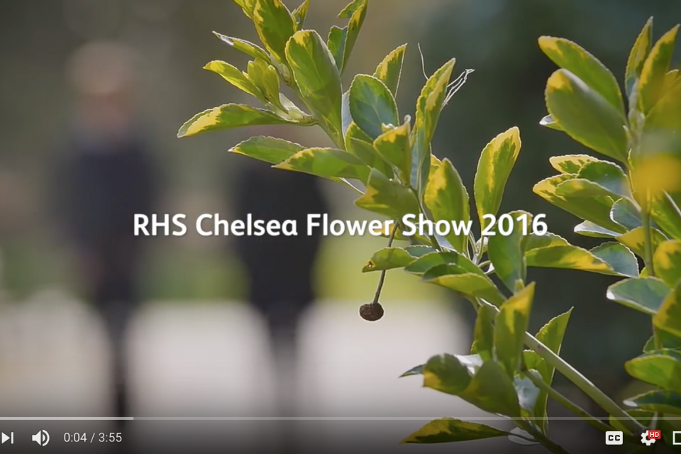 Chelsea Flower Show 2016 – Hugo Bugg Interview